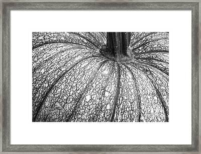 Pumpkin Pumpkin Black And White Framed Print by James BO  Insogna