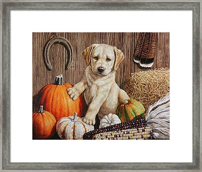 Pumpkin Puppy Framed Print by Crista Forest
