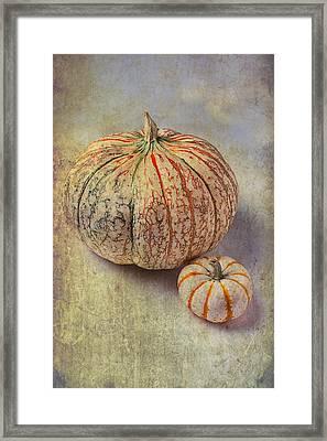 Pumpkin Textures Framed Print by Garry Gay