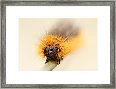 Punky Framed Print by Roeselien Raimond