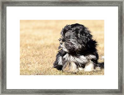 Puppie With A Stick Framed Print by Toppart Sweden