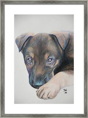 Puppy Dog Eyes Framed Print by Mikail Tate