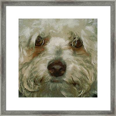 Puppy Eyes Framed Print by Ernie Echols