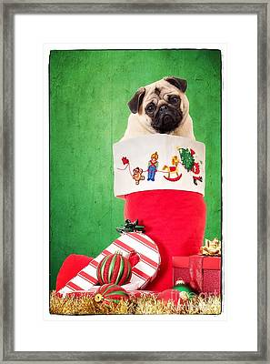 Puppy For Christmas Framed Print by Edward Fielding