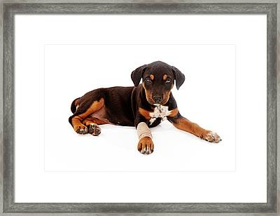 Puppy Laying With Injury Framed Print by Susan  Schmitz