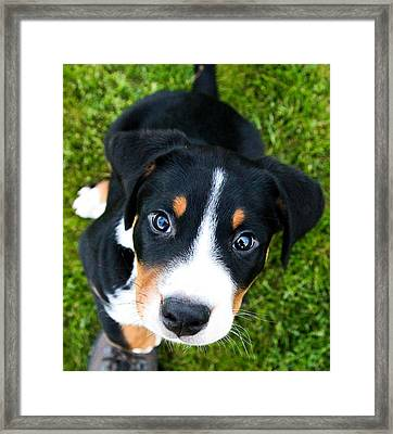 Puppy Love Framed Print by Aaron Aldrich