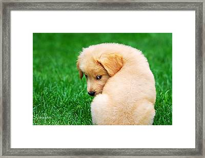 Puppy Love Framed Print by Christina Rollo