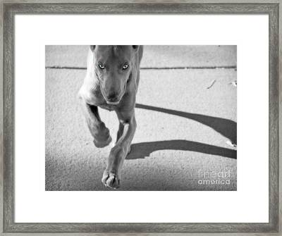 Puppy Love Framed Print by Jill Hyland