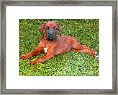 Puppy Love Framed Print by Jo Collins