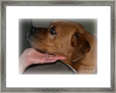 Puppy Loyalty Framed Print by Sandra Clark