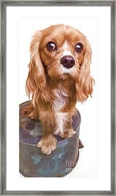 Puppy Phone Case Framed Print by Edward Fielding