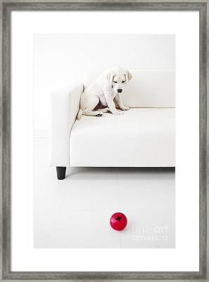 Puppy Problems Framed Print by Diane Diederich
