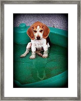 Puppy Refection  Framed Print by Lynn Griffin