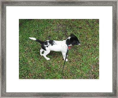 Puppy Sammy Framed Print by Abneris Verdecia
