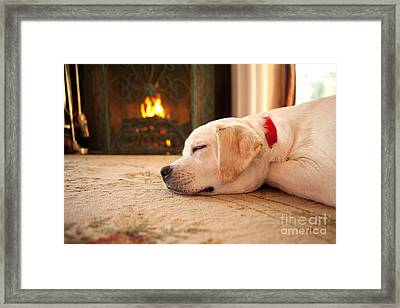 Puppy Sleeping By A Fireplace Framed Print by Diane Diederich