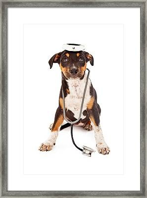 Puppy Veterinarian Framed Print by Susan Schmitz