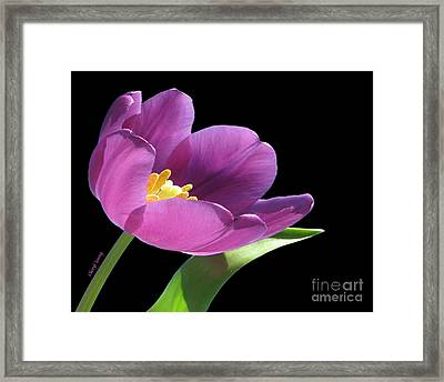 Pure Beauty Framed Print by Cheryl Young