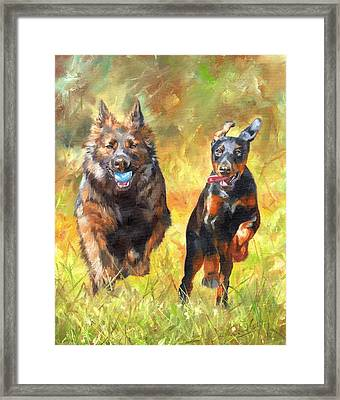 Pure Joy Framed Print by David Stribbling