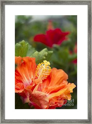 Pure Love Framed Print by Sharon Mau