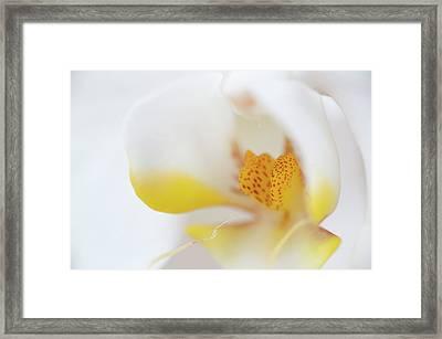 Pure White Framed Print by Sebastian Musial
