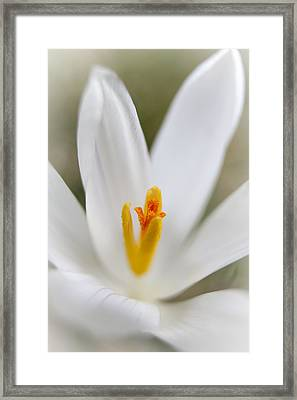 Purity Framed Print by Caitlyn  Grasso