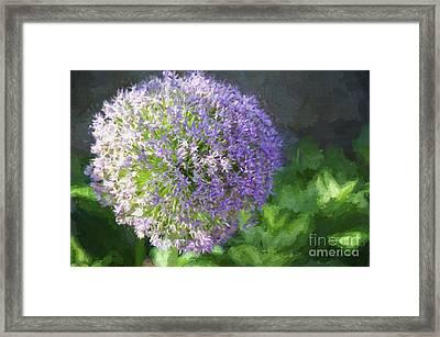 Purple Allium 1 Hollandicum Sensation  Framed Print by Andee Design