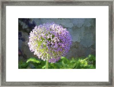Purple Allium 2 Hollandicum Sensation  Framed Print by Andee Design