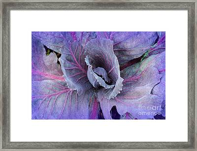 Purple Cabbage - Vegetable - Garden Framed Print by Andee Design