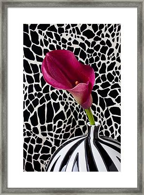 Purple Calla Lily Framed Print by Garry Gay