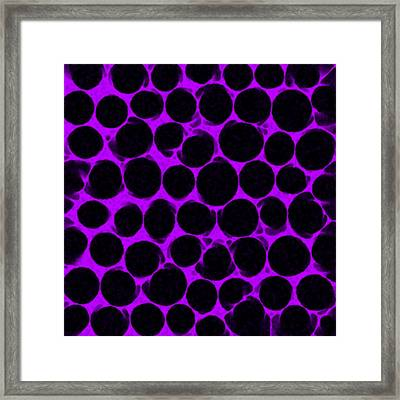 Purple Comb Framed Print by Josephine Ring
