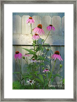 Purple Coneflower Framed Print by Steve Augustin