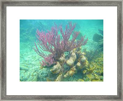 Purple Coral Framed Print by Adam Jewell