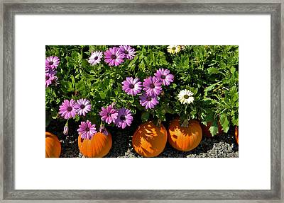 Purple Daisies And A Touch Of Orange Framed Print by Jean Goodwin Brooks
