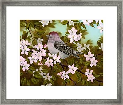 Purple Finch Framed Print by Rick Bainbridge