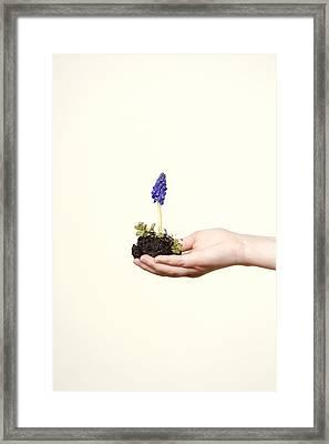 Purple Flower Framed Print by Joana Kruse
