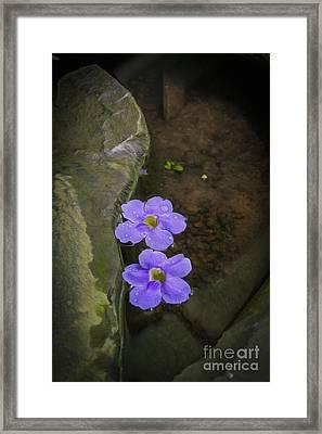 Purple Flowers Framed Print by Patricia Hofmeester