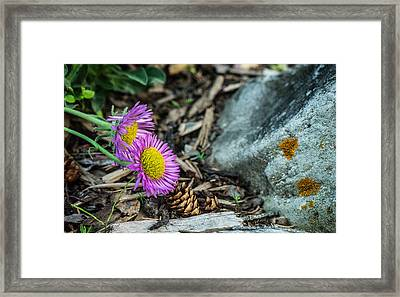 Purple Flowers Pine Cones And Lichens Framed Print by Douglas Barnett