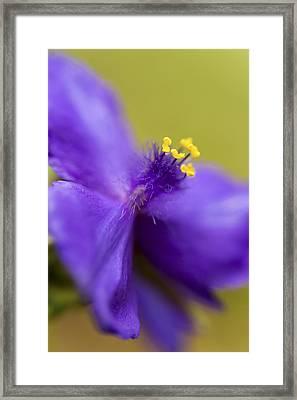 Purple Haze Framed Print by Caitlyn  Grasso