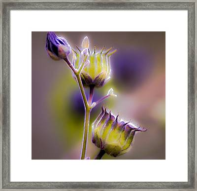 Purple Haze Framed Print by Optical Playground By MP Ray