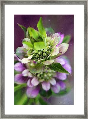 Purple Horsemint Wildflower Framed Print by Susan Schroeder