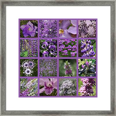 Purple In Nature Collage Framed Print by Carol Groenen