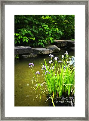 Purple Irises In Pond Framed Print by Elena Elisseeva