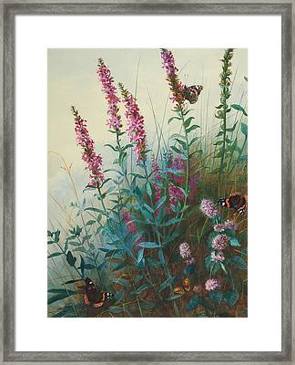 Purple Loosestrife And Watermind Framed Print by Archibald Thorburn
