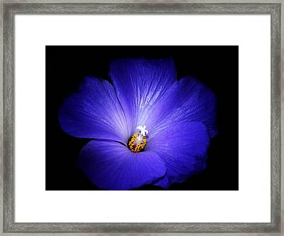 Purple Magic Framed Print by Camille Lopez