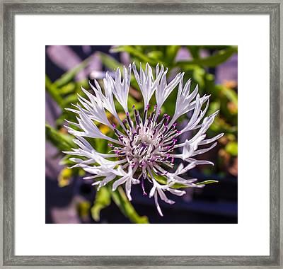Macro Flower Framed Print by Martin Newman