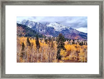 Purple N Gold Framed Print by Valene Dubbelman