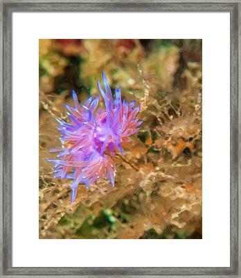 Purple Nudibranch Framed Print by Roy Pedersen