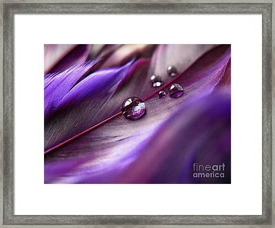 Purple Paradise Framed Print by Krissy Katsimbras