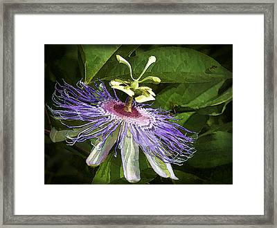 Purple Passion Framed Print by Kathy Clark