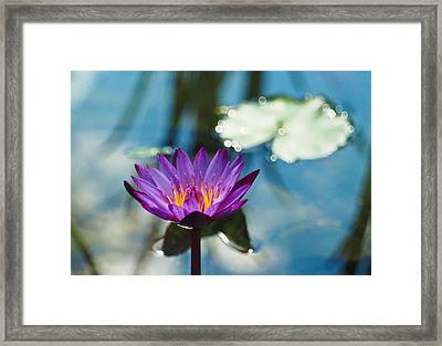 Purple Passion Framed Print by Linda Unger